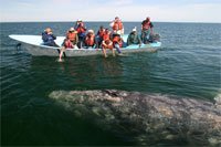 Baja Whale Watching Tours